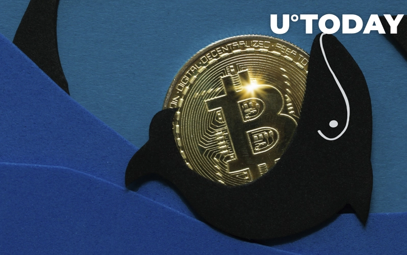 Có thể tăng 60% nữa đối với Bitcoin trong giai đoạn tích lũy mới do cá voi khởi xướng